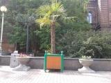 ГК «Стимэкс» принимает активное участие в общегородском движении «Миллионному городу – миллион деревьев» г.Красноярска